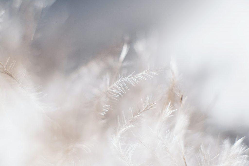 soft cotton fibers